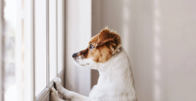 10 Warning Signs of Early Dementia in Dogs – 2021 Guide