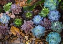 Are Succulents Easy to Maintain?