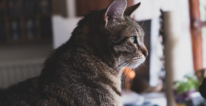 When Do Cats Stop Growing – 2021 Guide