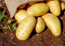 3 Advantages of Using Potato Diggers