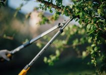 How Much Of A Tree You Can Cut Without Killing It