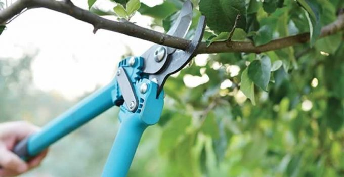 11 Dos And Don'ts Tree Trimming & Pruning