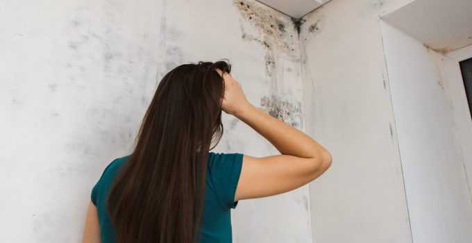 7 Tips For Preventing House Mold From Coming Back