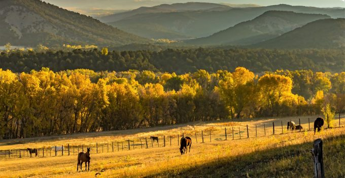 Is Buying Cattle Ranch a Good Investment