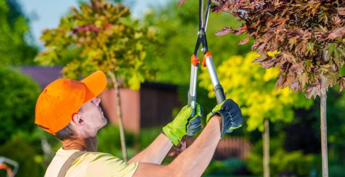How to Prepare Your Backyard for a Tree Trimming Service – 2021 Guide