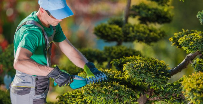 6 Reasons To Hire Professional Tree Trimming Services For Your Home