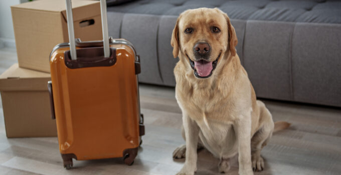 How Much Does It Cost to Transport a Dog Internationally?