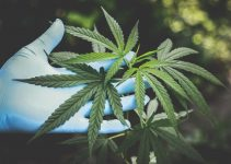 The Importance of Fertilizer and Nutrients for Your Marijuana Seed