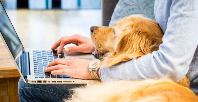 Is WiFi Radiation Harmful To Animals?