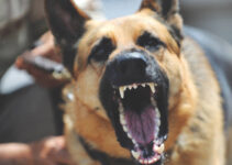 Compensation for Dog Attack Injuries in Australia