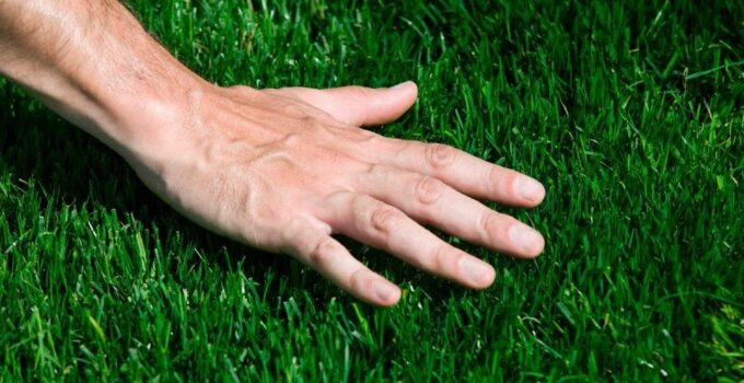 How To Get Thick Bermuda Grass – 2021 Guide