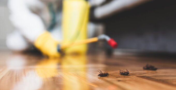 7 Easy Ways to Control Pest Infestation at Home in 2021