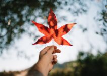 Guide to The Top 5 CBD Products in Canada